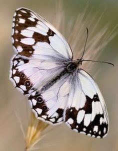 Lot de 2 Iridescent Spinning Jardin Papillons Rose /& Bleu Décorations Papillon