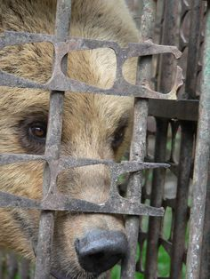 Get Me Outta Here, World Animal Protection, I Want To Cry, Dear God, Romania, Charity, Beautiful People, Bear, Animals