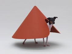 Architecture for dogs.