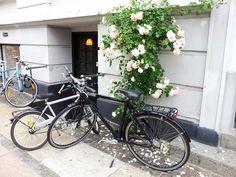 Danish summer - flowers and bicycles on Islands Brygge, Copenhagen