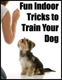 Dog Obedience Training Tips And Techniques and Pics of Dog Training Tips Jumping On Furniture. Tip 1664441 Dog Commands Training, Training Your Puppy, Dog Training Tips, Potty Training, Training Schedule, Crate Training, Training Equipment, Game Mode, Yorky