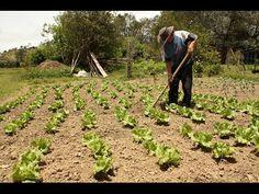 Cómo proteger los diferentes tipos de Cultivos de manera Orgánica - TvAgro por Juan Gonzalo Angel - YouTube