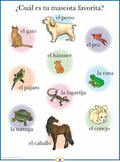 Introduce pet names with this colorful 18 x 24 in. poster that includes a free guide with teaching suggestions and practice worksheets.