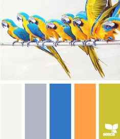 Color Squawk - **This would be perfect to match all of RR's colors in her cookware!**  I have orange Rachael Ray cookware and would like to find a nice color palate to match.