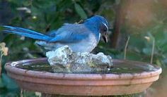 How to build simple bird baths for your home.