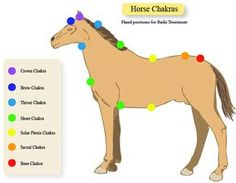 Horse Equine Chakra Charts Reiki Hand Positions by EarthChiJewelry, $3.50