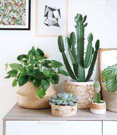 Family cactussen.