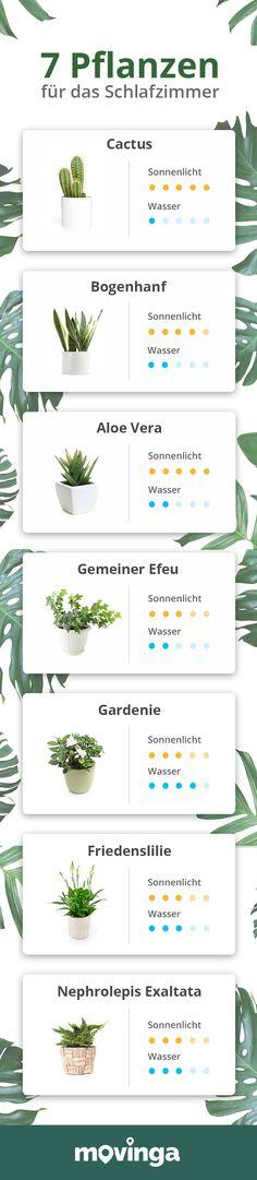 Die 22 Besten Ideen Zu Luft Reinigen Pflanzen Pflanzen Pflanzideen Zimmerpflanzen
