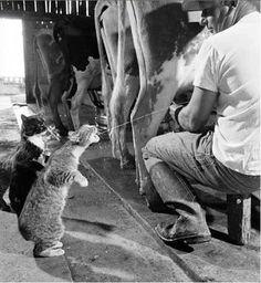 Cat Heaven!