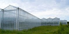 The Venlo structure is our most popular type of greenhouse. This structure has a standard roof width of 3.2m, but we can also supply a 4.0m roof width where maximum light levels are required. Depending on the individual requirements, the glasshouse can then be made up from 1, 2, 3 or 4 roof sections at a time, supported using lattice girders. For this reason, the Venlo glasshouse is an extremely versatile structure, which can usually be tailored to meet any requirements. Glass House, Greenhouses, Bridge, Meet, Popular, Canning, Type, Building, Garden