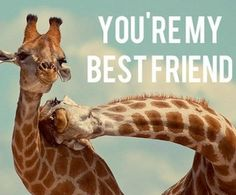 Find images and videos about friends, animal and giraffe on We Heart It - the app to get lost in what you love. Best Friends Sister, Bestest Friend, Best Friends For Life, Best Friends Forever, True Friends, Bff Quotes, Best Friend Quotes, Funny Animals, Cute Animals