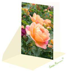 Diese Rosenkarte ist ohne Text und eignet sich als Geburstagskarte, Dankeskarte und vieles mehr... Neutral, Flowers, Plants, Thanks Card, Joie De Vivre, Florals, Planters, Flower, Blossoms