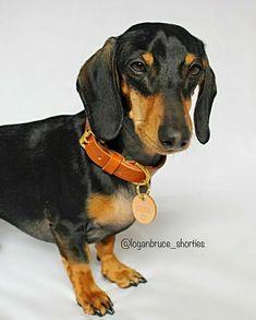 Mini Dachshund, Dachshunds, Wonderland, My Love, Dogs, Cute, Animals, Beautiful, Dachshund