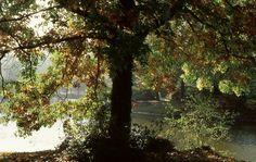 #parc du #château de #Courson #lartdujardin