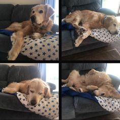Got him a new blanket for his birthday he loves it http://ift.tt/2so6dfK via /r/dogpictures http://ift.tt/2sjkOsc #lovabledogsaroundtheworld