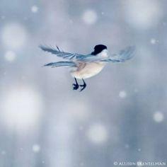 Winter Wonder Blue's ❄️❄️❄️