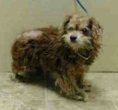 SAFE - 02/08/15  by Friends of Homeless Animals SUPER URGENT 02/04/15  Brooklyn Center  AGNIS - A1027145  UNKNOWN GENDER, BROWN / CREAM, CAVALIER SPAN / COCKER SPAN, 13 yrs STRAY - STRAY WAIT, NO HOLD Reason STRAY  Intake condition UNSPECIFIE Intake Date 02/04/2015 https://www.facebook.com/Urgentdeathrowdogs/photos/pb.152876678058553.-2207520000.1423348304./957987314214148/?type=3&theater