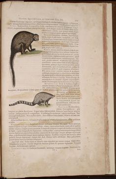 The Missouri Botanical Garden Library presents its Rare Book Digitization Project. Books To Buy, Alchemist, Book 1, Jaguar, Image
