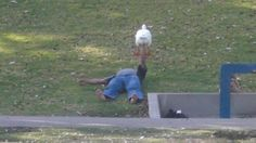 man bench pressing a goose in a park - the goose press