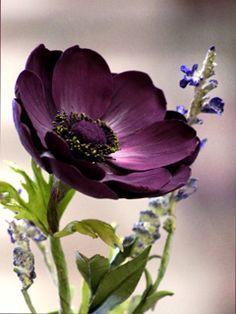 Sugar Art Studio-sugar art studio-sugarartstudio-Giovanna Smith-giovanna smith-Gio's Collection-gio's collectionll-Gumpaste Flower-gumpaste flower-Classes-classes-Gumpaste Flower Classes-gumpaste flower classes-SCULPTING CLASS-sculpting class