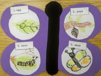 butterfly life cycle/art project