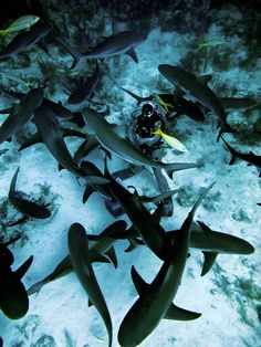 with Sharks
