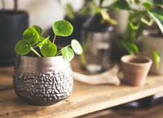We are loving this pot with an aluminium finished look #pilea