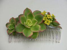 joala:  succulent hair comb