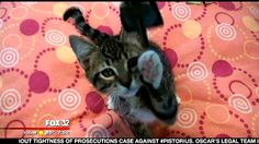 FOX Furry Friends of the Week: 325 homeless kittens - Chicago News and Weather | FOX 32 News 8/19/13 #pawschicago #adoptable #pets
