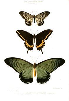 Free_Vintage_Butterfly_Print_white_BG.jpg 1,657×2,421 pixels
