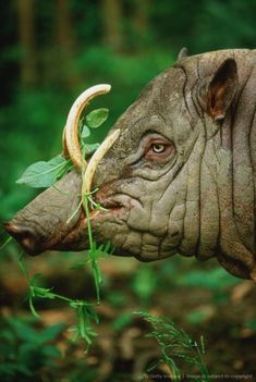 Warthog using its tusks to pull plants roots from the soil. Animals Of The World, Animals And Pets, Funny Animals, Cute Animals, Interesting Animals, Unusual Animals, Bizarre Animals, Beautiful Creatures, Animals Beautiful