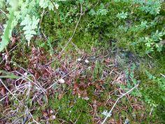 Tiny Mushrooms. Beecraigs Country Park