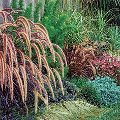 Soften a wall - Purple fountain grass and other foliage plants create a leafy screen that adds texture in front of a fence or wall.