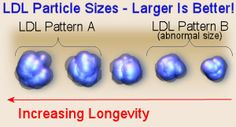 """LDL cholesterol particle size - larger is better for longevity - """" Evidence Supports LDL Particle Size Test There is ample evidence the predominance of small, dense LDL is a reflection metabolic abnormalities, all of which are independent precursors of cardiovascular disease"""""""