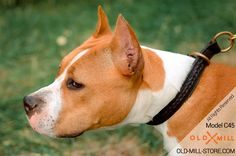 Amstaff Collar for Handling large and active breeds