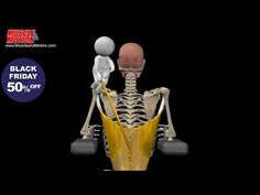 Latissimus Dorsi Anatomy and Exercises - YouTube