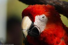 Macaw by MicWits101