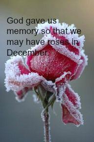 Roses in December.
