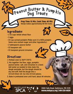 Bake Your Own Peanut Butter & Pumpkin Dog Treats! - Maryland SPCA