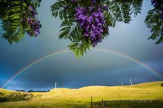 Upcountry Beauty, Maui | Hawaii Pictures of the Day