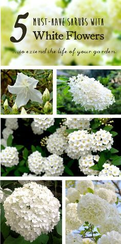 5 Must-Have Shrubs with White Flowers...to extend the life of your garden. Redeem Your Ground | RYGblog.com   #gardenchat