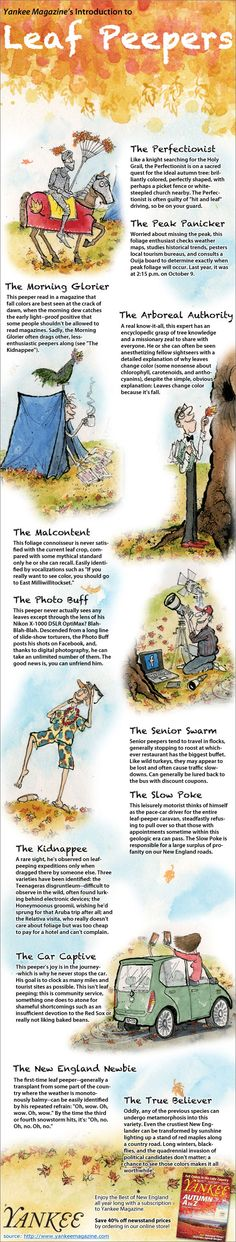 Which kind of leaf peeper are you? #foliage --Illustration by Mark Brewer