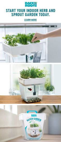 """An award-winning, home aquaponics fish tank that comes with a """"100% Guaranteed to Grow"""" promise — great for beginners. It's both self-cleaning and grows organic sprouts and herbs on top. The fish waste fertilizes the plants and the plants clean the water — no water changes required!"""