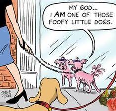 Cartoon Of Dog | funny-dog-cartoon-fuffy-little-dog