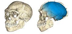 Az+arca+alapján+össze+lehetne+téveszteni+velünk+–+mondják+a+régészek,+akik+megtalálták+a+300-250+ezer+évesre+becsült+koponyát+Marrokóban,+Dzsebel+Irhud+közelében.+Az+előző+rekord,+amelyet+Etiópiában+találtak,+195+ezer+éves+volt.  Öt+egyénhez+tartozó+maradványokat,+koponyát,+áll-+és+húsz+egyéb+féle…