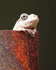 Hot Frog by Greg Miles
