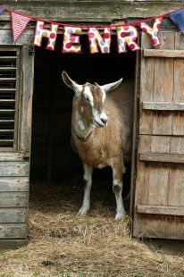 LOVE! Now I want to make a little goat house for each one of my goats. :)