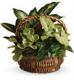 Emerald Garden Basket in Lake Orion MI, Amazing Petals Florist: