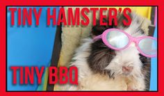 Tiny Hamster's Tiny BBQ [Tiny Hamsters Episode 8] #tinyhamsters #hamsters #pets #funny #comedy #geek #viral #animals