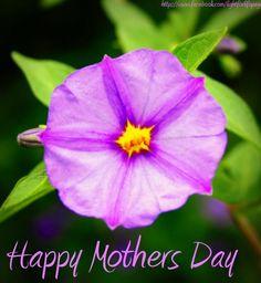 Happy Mother's Day via www.Facebook.com/LightforLifePage